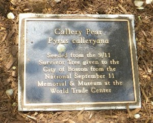 SurvivorTreePlaque